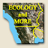 Ecology and More